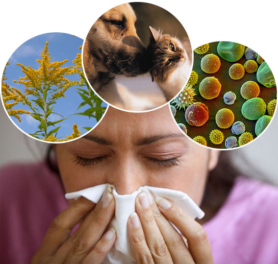 10 steps to improve sinus allergies